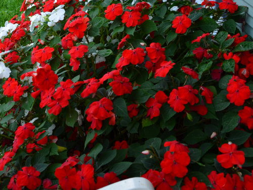 Flowers...Zale's landscapers beautify and captivate your landscape in expressive ways with the right selection of Flora, while helping the environment.