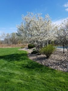 Residential Lawn Care and Landscape Design